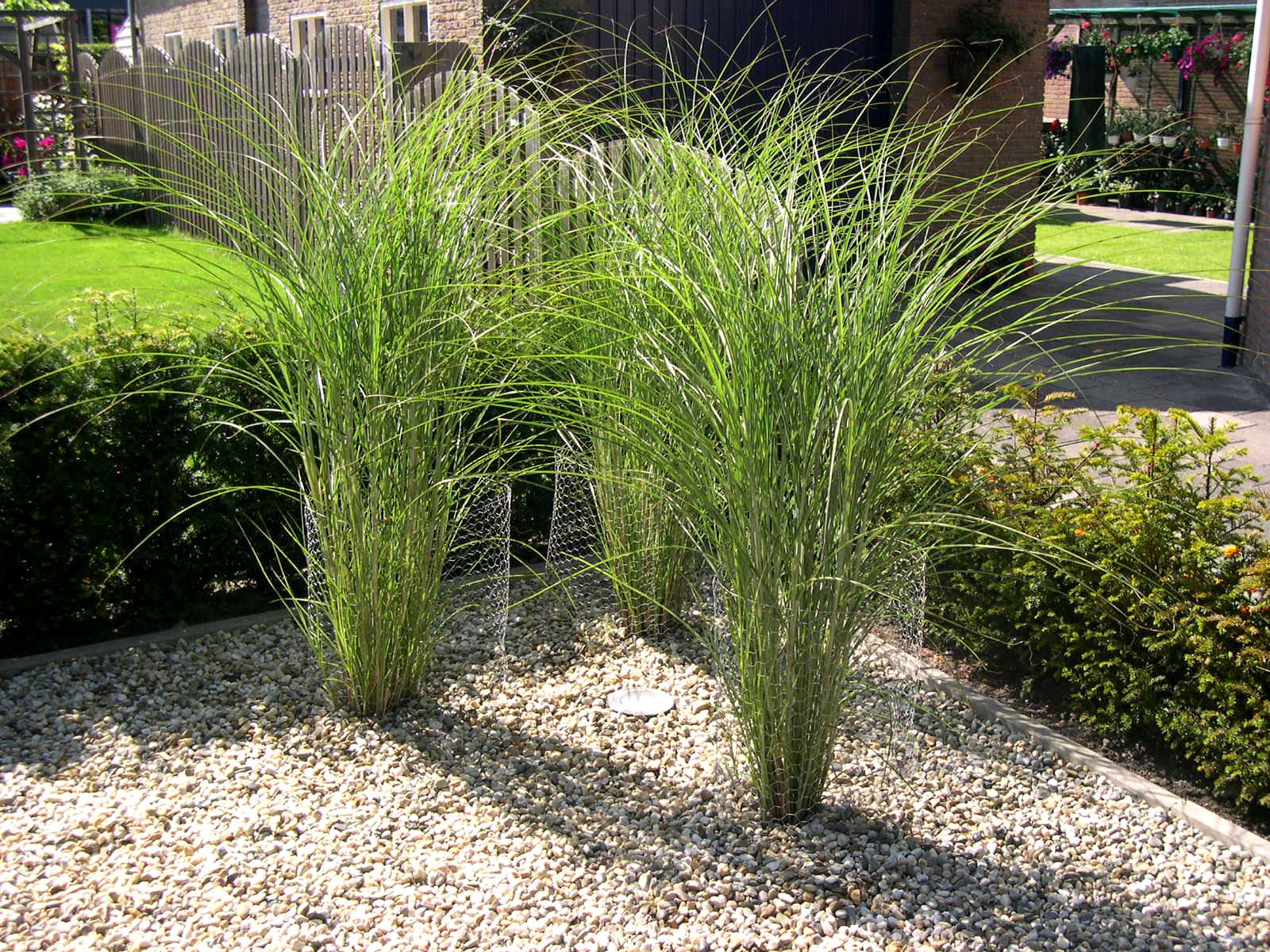 Gras In Tuin : Tuin gras vraag en antwoord het leggen van graszoden in de tuin